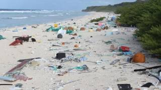 News Update Remote island has 'world's worst' plastic rubbish density 16/05/17