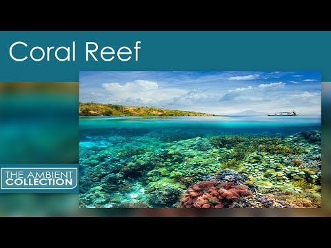 Ocean DVD - Relax With A Coral Reef With Ocean Sounds