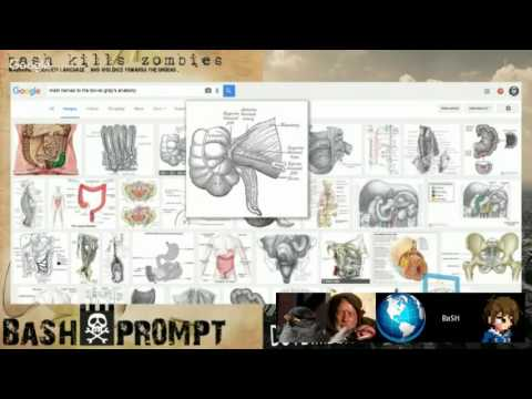 Conspiracy, Politics, and the Flat Earth & Chiropractic