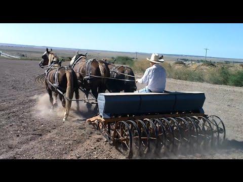 Horse Drawn Farming In Western Nebraska