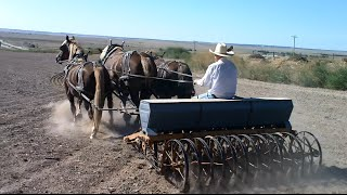 Horse Drawn Farming in Western Nebraska