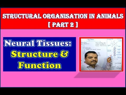 Nervous Tissue Structure and Function | Structural Organisation in Animals | NEET Bio | Part 2