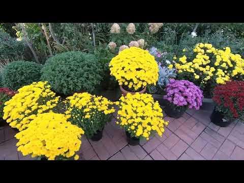 Обзор цветников 13 сентября 2020