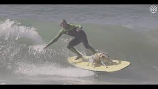 Sugar the Surfing Dog