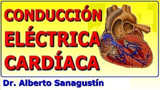 Conducción vía del circulatorio de sistema