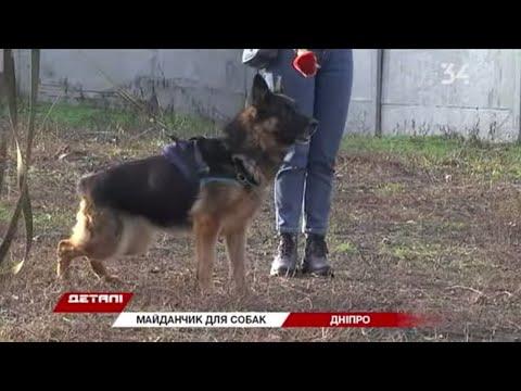 34 телеканал: В Днепре открыли городскую площадку для дрессировки собак