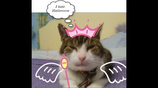 top 10 funniest cat memes - the funniest cat memes