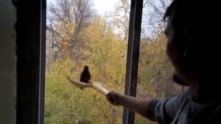 Голубь мешает ставить окно