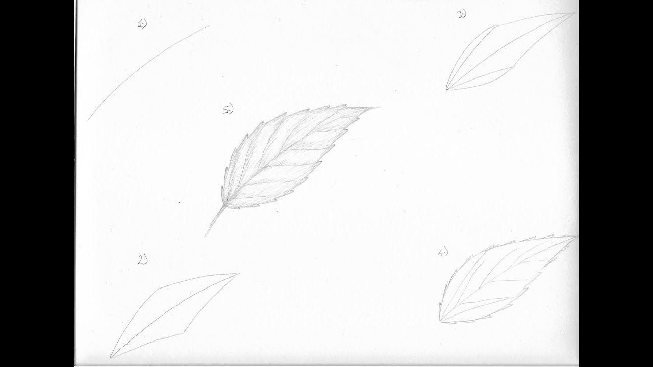Uncategorized How Do You Draw A Leaf how to draw a leaf in 5 simple steps youtube steps