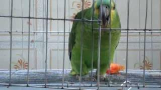 Papagaio Inteligente
