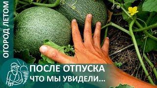 ☘ Огород Гордеевых после отпуска в июле: что изменилось за время нашего отсутствия