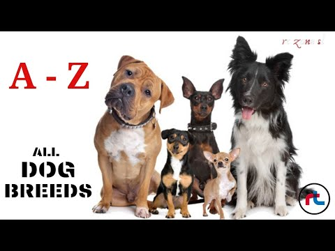 ALL DOG BREEDS IN THE WORLD  A  Z  Types Of Dogs