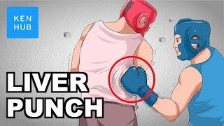 Why-can-t-your-body-handle-a-punch-to-the-liver-Human-Anatomy-Kenhub