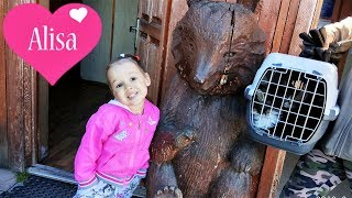 ВЛОГ Алиса и папа везут котят на первую прививку КОТЯТА МЕЙН-КУН Детский канал Little baby Алиса