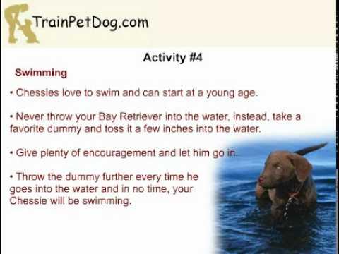 5 Interesting Activities For Bay Retriever Puppies