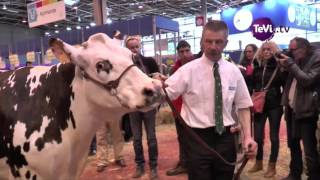 La vache Normande fait salon