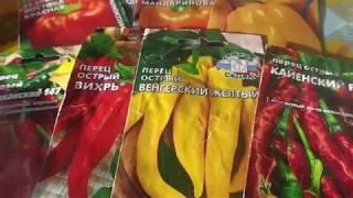 Посев разных сортов острых и болгарских перцев пророщенными семенами