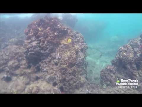 Hawaii Fish & Marine Wildlife Information | Maui, Kauai, Big