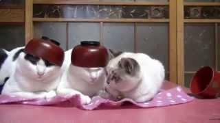 Нарезка смешных видео про кошек, ржака, я плакал! Смотреть всем
