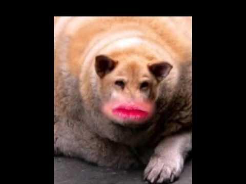 World S Fattest Dog Ever