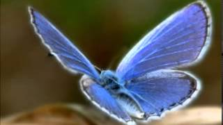 Abraham Hicks ~ Pt 3 ~ Young With Strong Desire