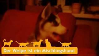 Mischlingshunde Welpen In Berlin