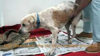 Video Sad story can make you cry -  A dogs story... download MP3, 3GP, MP4, WEBM, AVI, FLV Agustus 2017