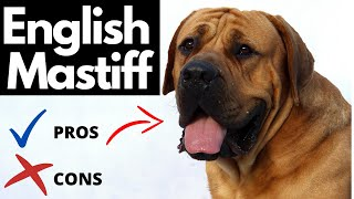 English Mastiff Pros And Cons | The Good AND The Bad!!