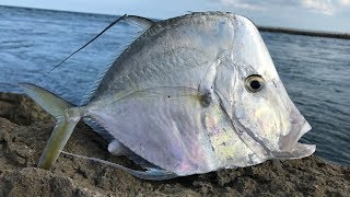 The STRANGEST Saltwater Fish... Lookdown-Catch Clean Cook (Moonfish)