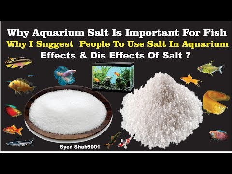 Why Aquarium Salt Is Important For Fish & Normal Salt VS Aquarium Salt
