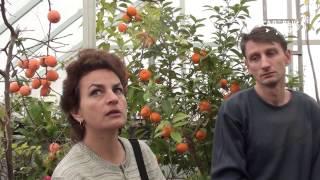 видео Зимний сад в доме