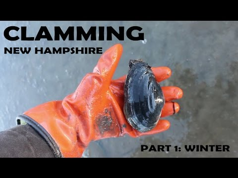 Clamming New Hampshire part 1: winter