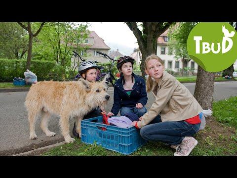 Hundefänger (Folge 17)   Tiere bis unters Dach   SWR Kindernetz