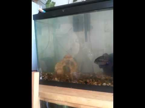Flirty Fish