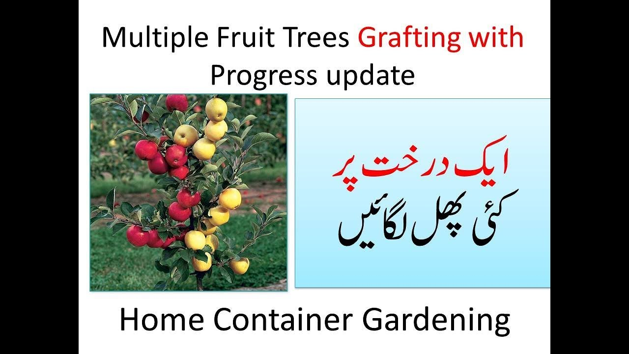 Multiple Fruit Trees Grafting with Progress update ...