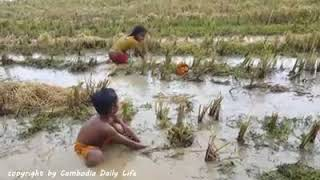 Brave Children Catch vicious snake by hand in Cambodia