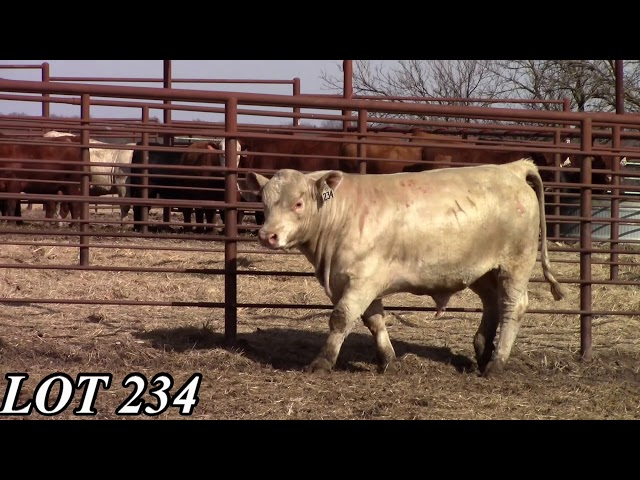 Mead Angus Farms Lot 234