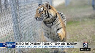 Search for owner of tiger spotted in west Houston