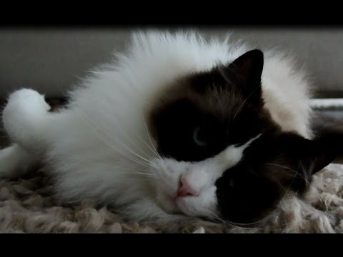 Lovable Sleepy Cat