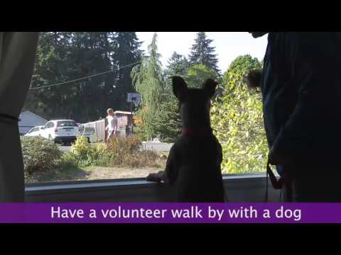 How To Stop Your Dog From Territorial Barking