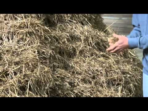 Is this art? Performance artist spends 2 days looking for needle in a haystack