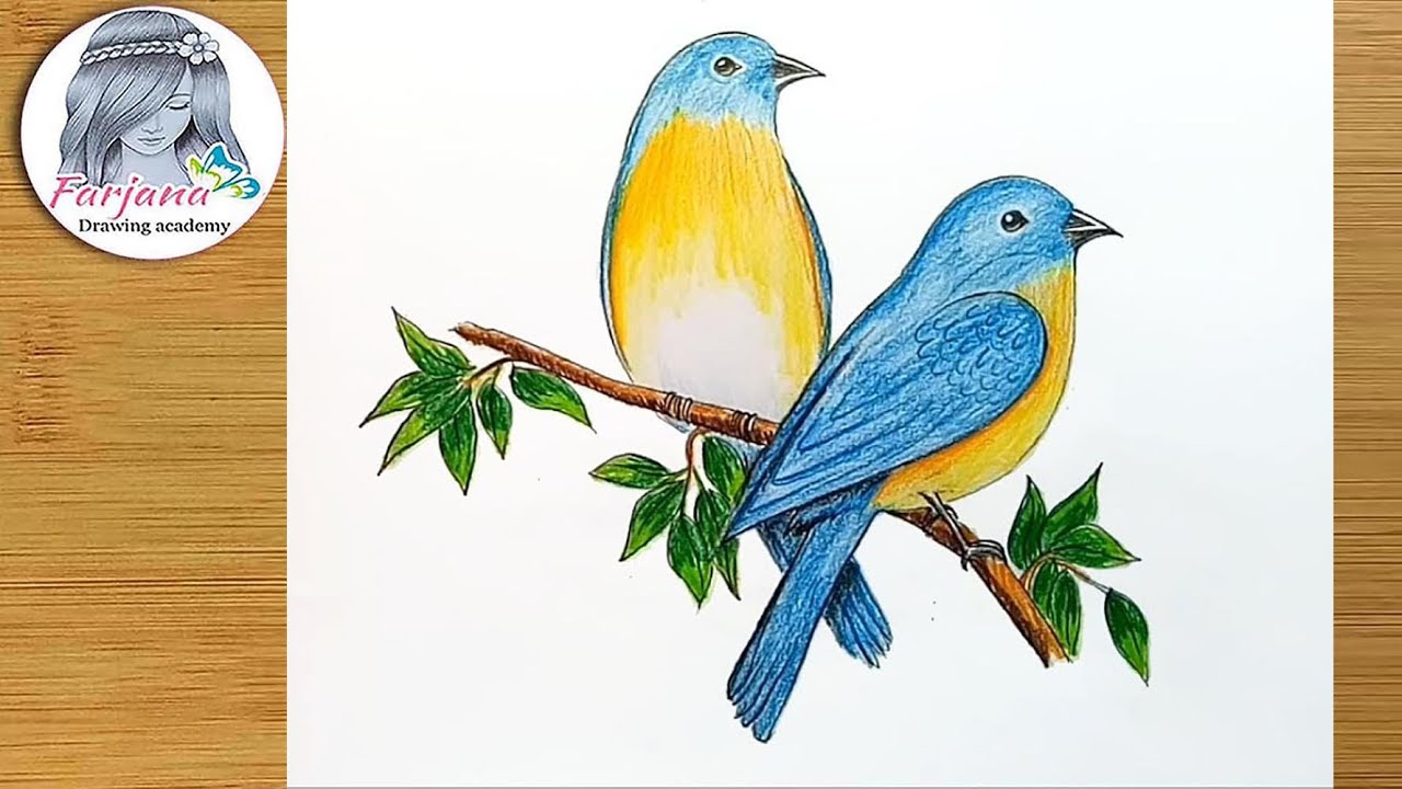 How To Draw Eastern Bluebirds Step By Step