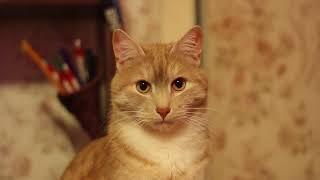 Video test Canon 600d +50mm f/1.8(Мой первый опыт съемки и монтажа видео на DSLR камеру. В главной роли мой кот. Съемка произвелась фотокамерой..., 2016-04-25T20:57:47.000Z)