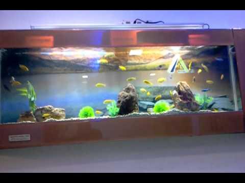 Aquarium Outlet Of Aquarium Design India In Spencer Plaza