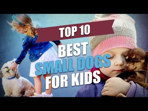 Top 10 Best Small Dogs for Kids
