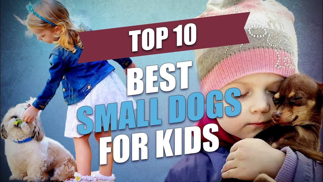 35 Best Medium and Small Dogs for Kids – Top Dog Tips
