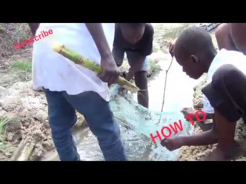 HOW African children catch fish with bare hands