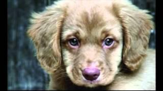 ağlayan köpek sesi