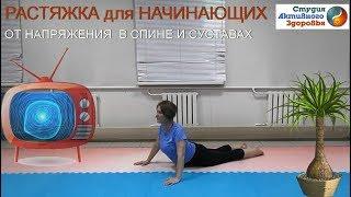 Растяжка для начинающих / Избавление от напряжения в спине и суставах