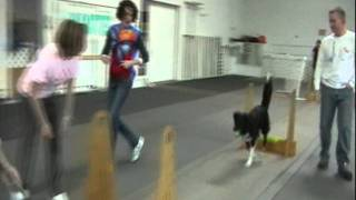 Flyball Lessons And Training, Seattle Flydogs, Seattle, Washington